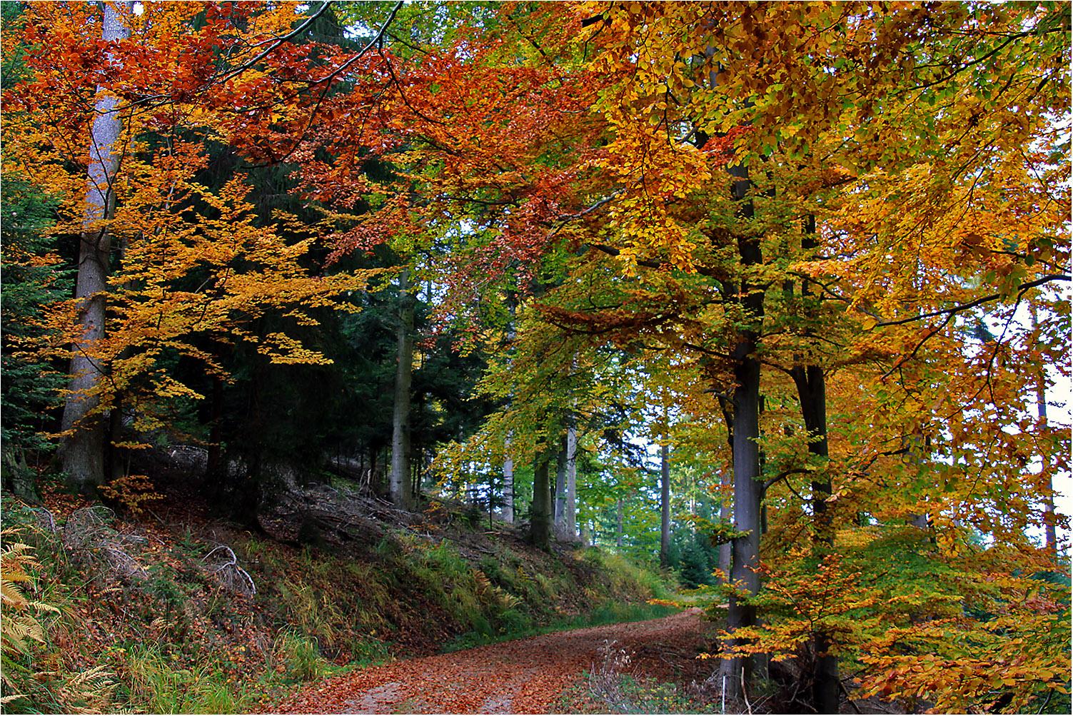 Im Herbstwald