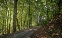 im Hotzenwald