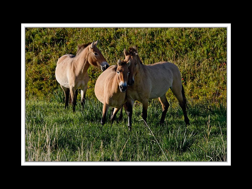 Im Hustai-Nationalpark 05
