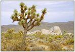 Im Joshua Tree National Park - California, USA