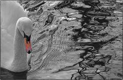 Im kalten Wasser