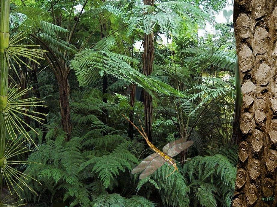 Tertiär Pflanzen