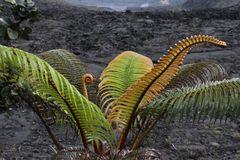 im Kilauea Iki Krater