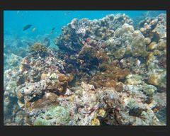 Im Korallenriff