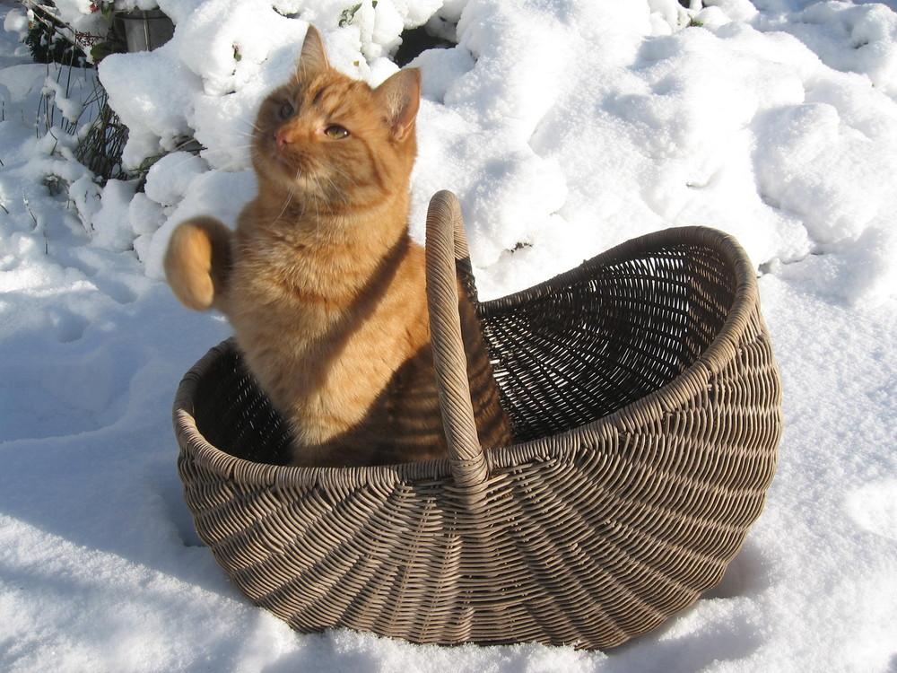 Im Korb werden die Pfoten nicht so kalt