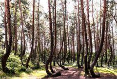 Im Krummen Wald