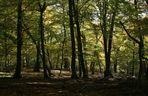 Im Lainzer Tiergarten