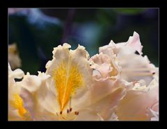 Im Land der Blüten