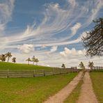 im Land der einsamen Bäume