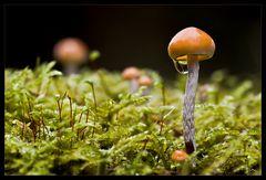 Im Land der kleinen Pilze