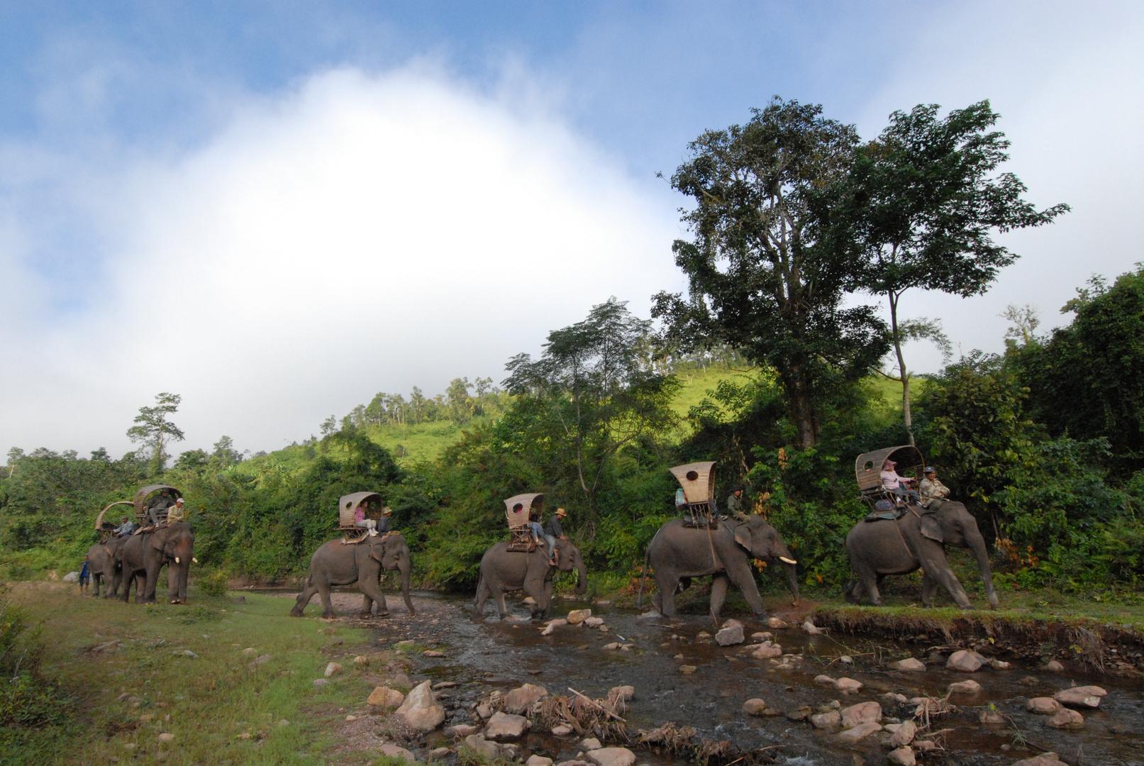 """.. im """"Land der Millionen Elefanten"""""""