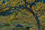 Im Land der Trolle [26] - Leuchtender Herbst