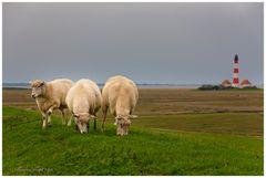 Im Land der vielen Schafe ...