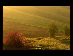 Im Land des goldenen Lichts...
