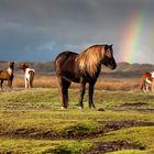 Im Land des Regenbogens