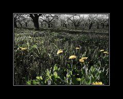... im letzten Frühling ...