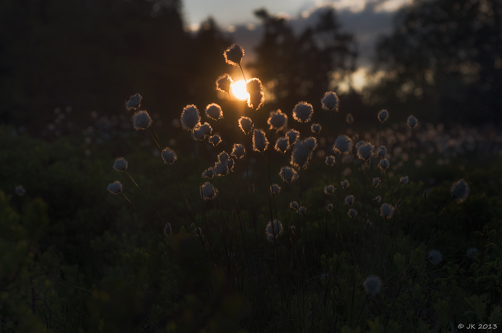 Im letzten Sonnenlicht II