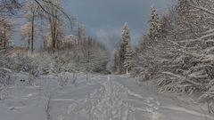 im letzten Winter....
