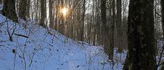 Im letzten Winter im Naturschutzgebiet Erlen-Eschenwald...