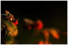 Im Licht der Abendsonne...