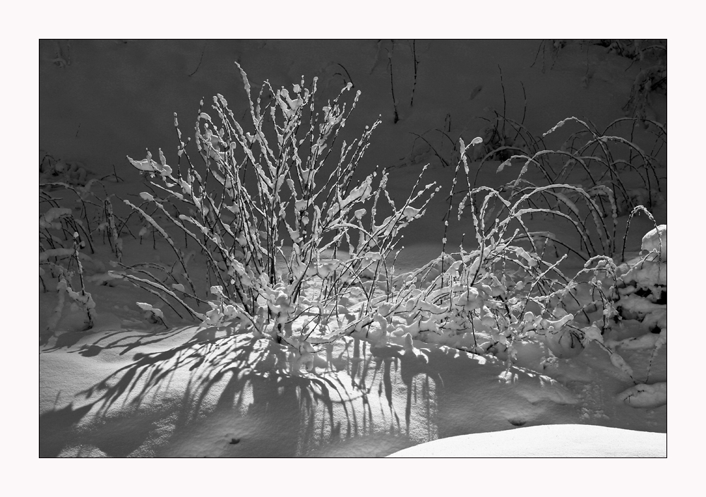 im Licht der Wintersonne