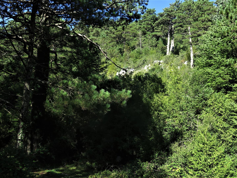 Im Llogara Nationalpark