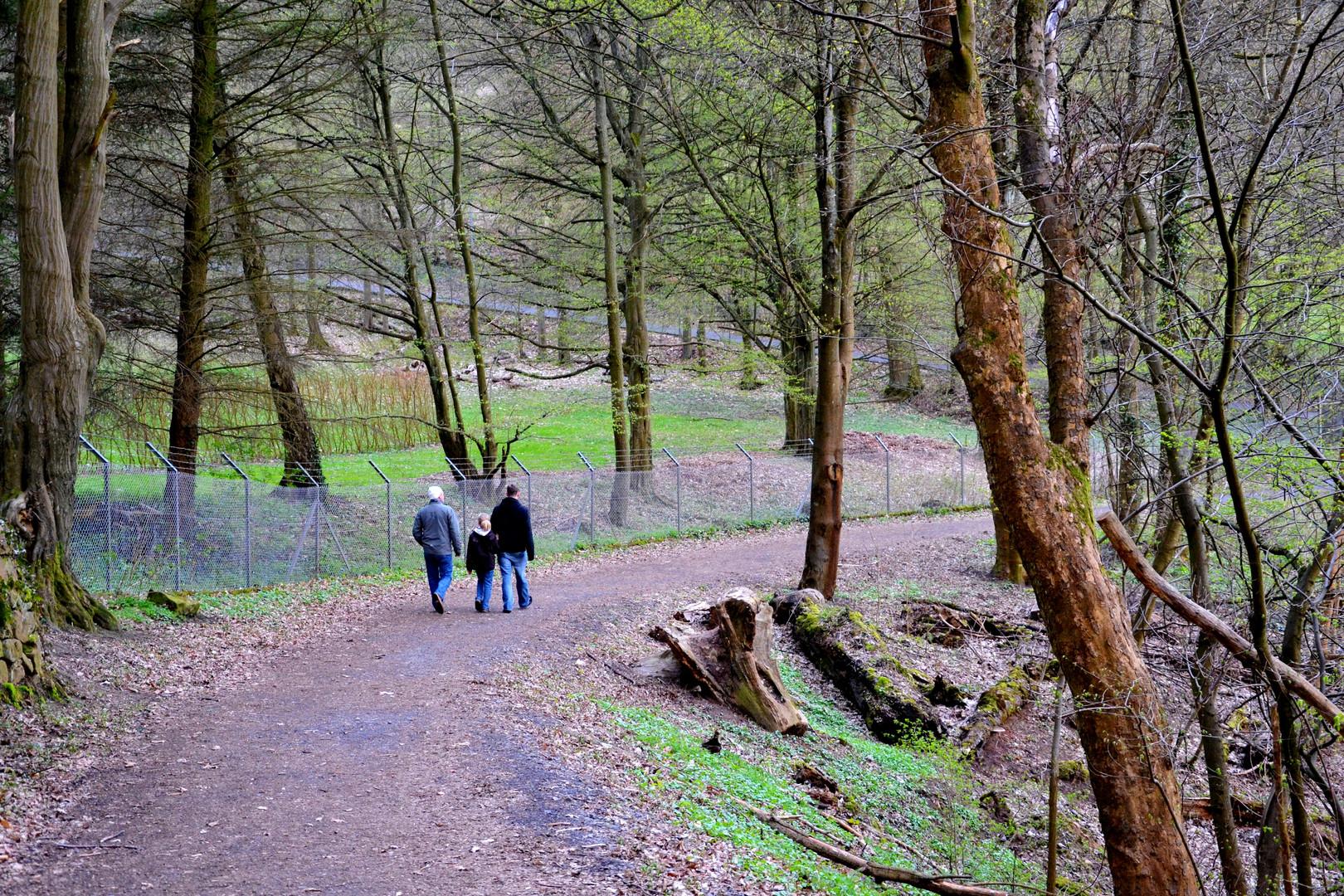 im Mächenwald beim Marburger Schloß