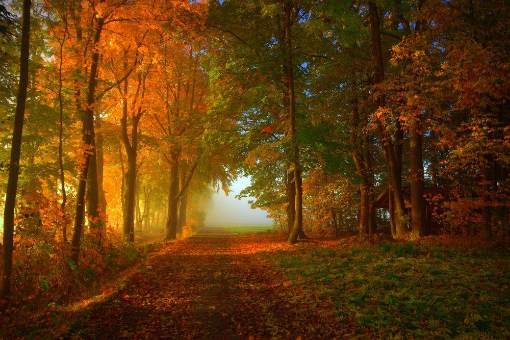 Im Märchenwald von Kronach angekommen…