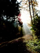 im marrenwald