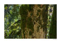 im Marsupilami-Wald