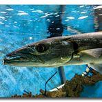 Im Meerwasser Aquarium #4