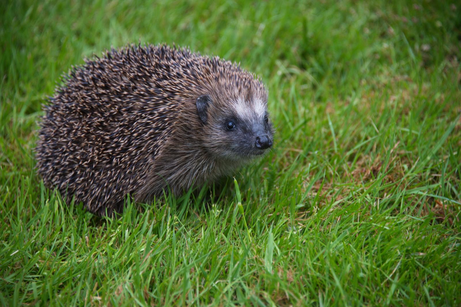 im moment foto  bild  natur tiere wildlife bilder auf