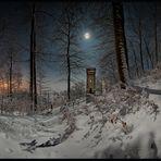 im Mondscheinwald