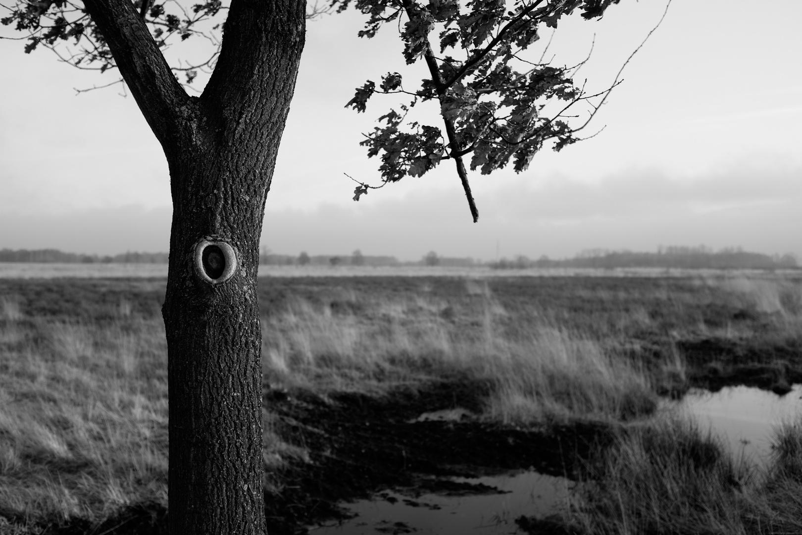 Im Moor der Einsamkeiten