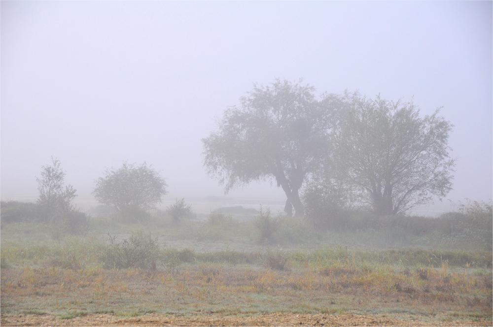 im Morgen - NEBEL