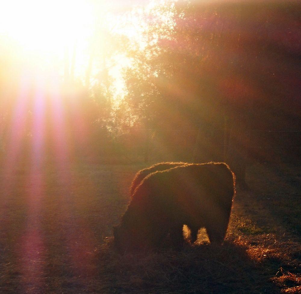 Im Morgengrauen
