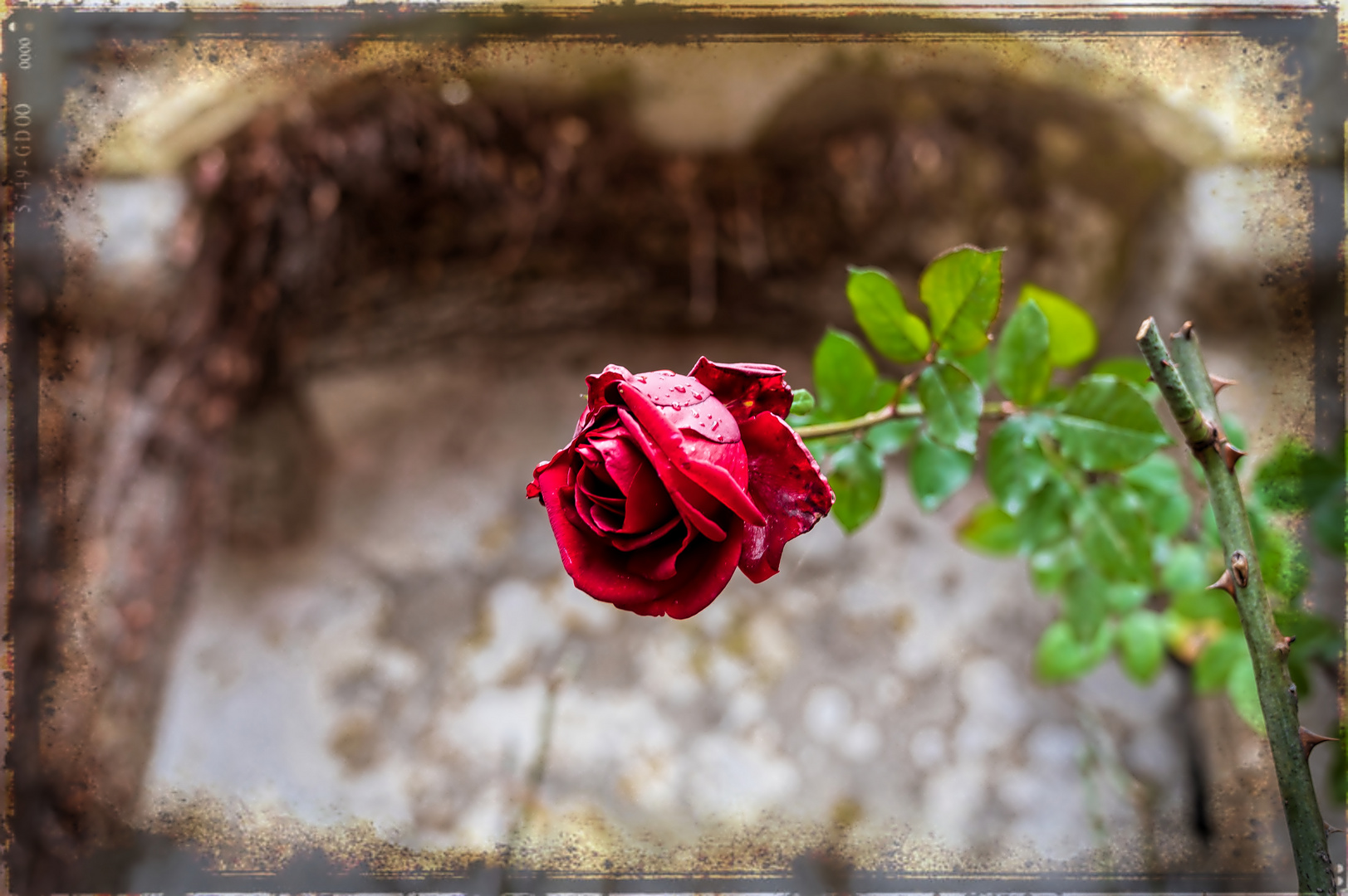 Im Namen der Rose... Dezember 2019
