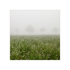 im nebel (4)