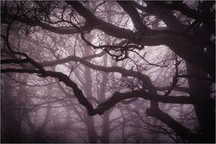 Im Nebel der Zeit...