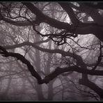 Im Nebel der Zeit