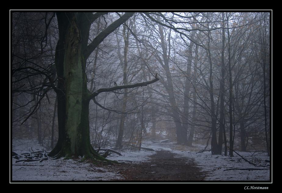 ...Im Nebel...