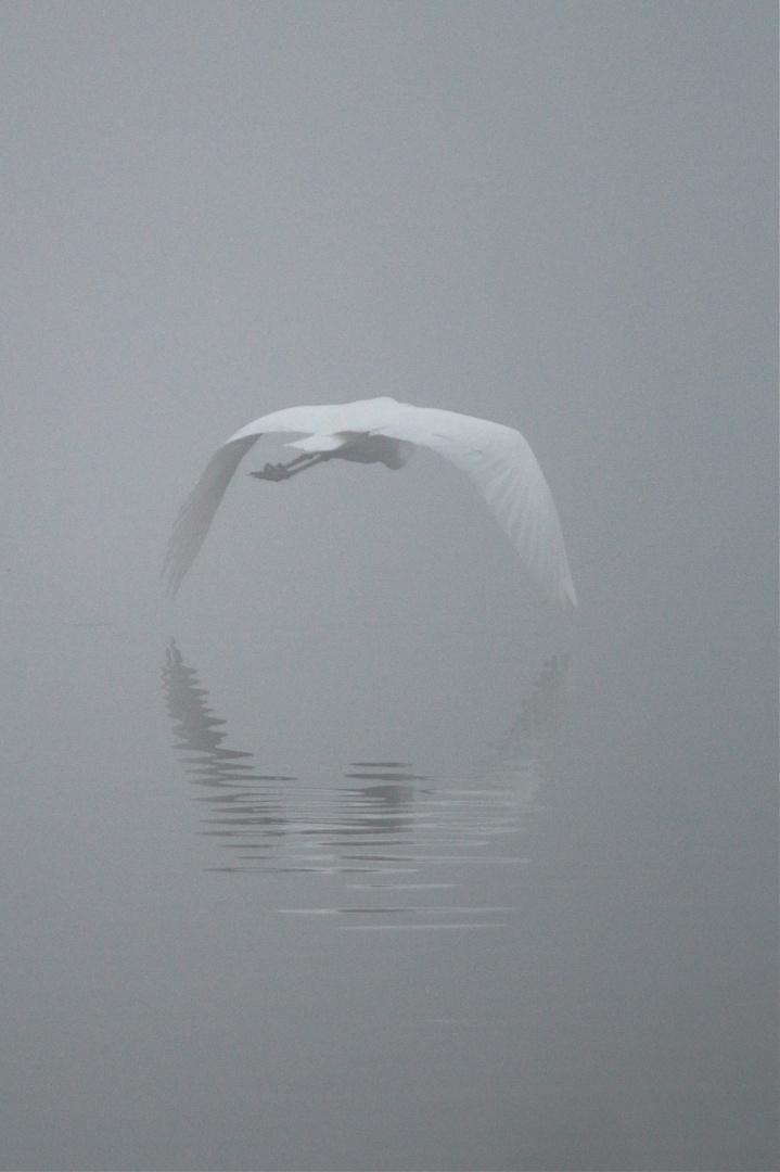 Im Nebel einsam