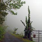 ..im Nebel..