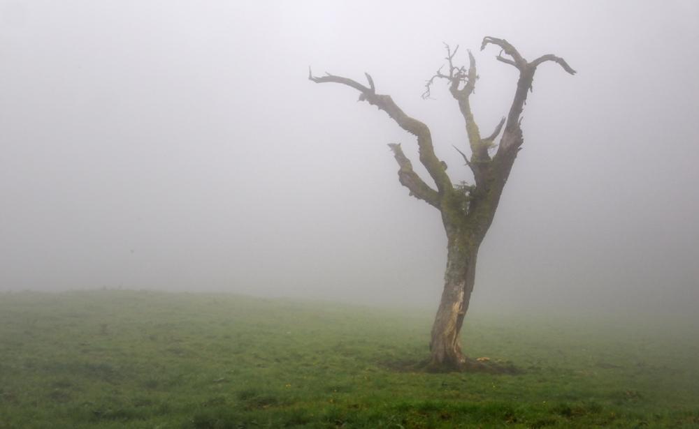 Im Nebel II