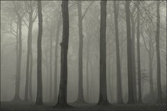Im Nebelwald ...