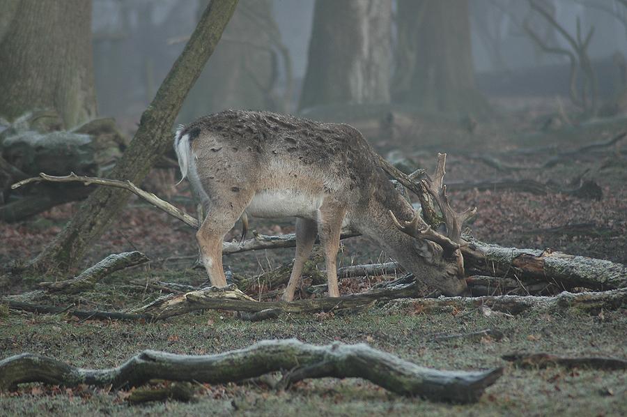 Im Nebelwald I