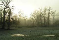 Im Nebelwald III