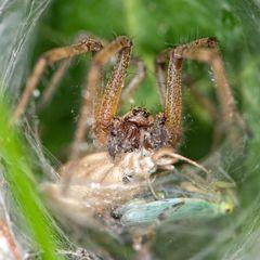 Im Netz der Spinne gefangen...