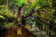 Im neuseeländischen Urwald....