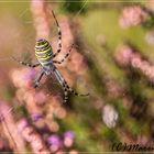 Im Nezt der Spinne